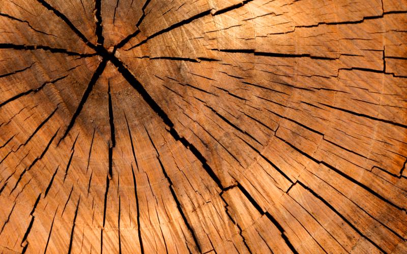 Meble lite drewno