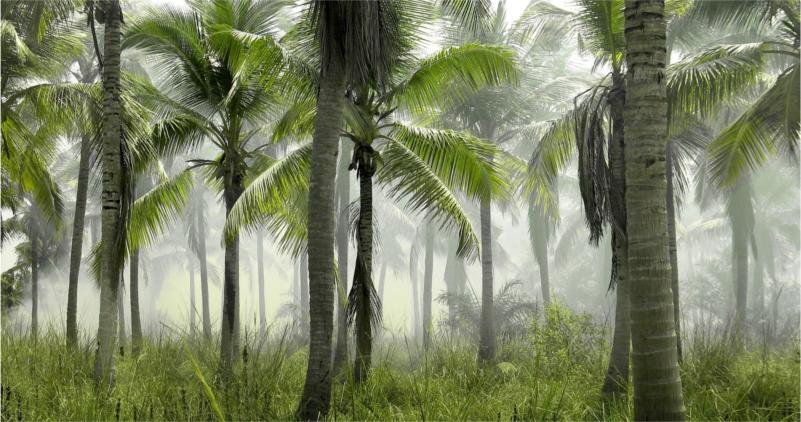Ciekawostki o drzewach czyli natura zaskakuje